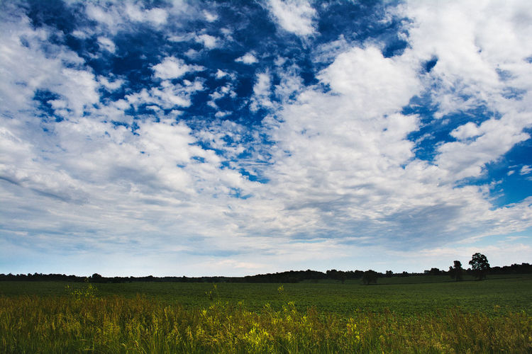 Sky Cloud - Sky Landscape Environment Field Land Beauty In Nature Tranquility Tranquil Scene Scenics - Nature Nature Plant Grass Growth Day No People Agriculture Rural Scene Outdoors Non-urban Scene Spring