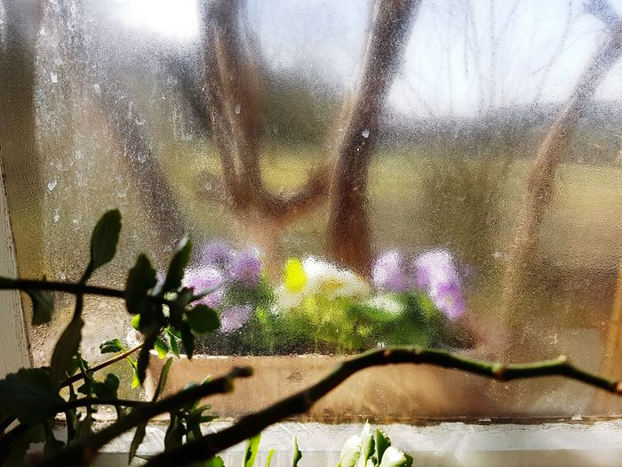 Window Sill Flowers Home Sunny Springtime Blurry
