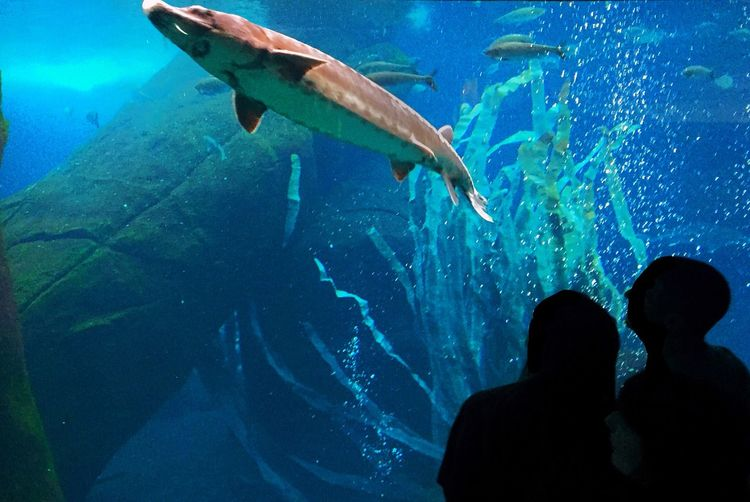 Blue Wave Men And Fish Blue Fish In The Bassin Check This Out Hanging Out Enjoying Life Aquarium Life Aquarium Aqua Leisure Activity Cultural Activity Learning Educational Time Educational Marine Life Marine Animal Biodiversity