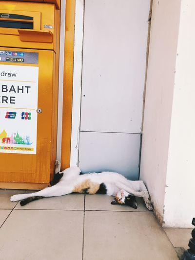 Dog relaxing on door
