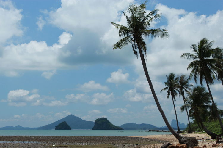 Sea Krom Luang Chumphon Khet Udomsak Beach Beauty In Nature Cloud - Sky Coconut Palm Tree Day Environment Land Mountain Nature No People Outdoors Palm Tree Plant Scenics - Nature Sky Tranquil Scene Tranquility Tree Tropical Climate Tropical Tree Water