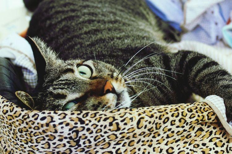 Cute Pets Cat Tom Cute Cats Cute