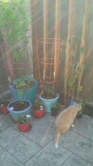 EyeEm Nature Lover Time Began In A Garden