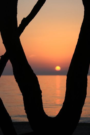 Sunset Sunset Silhouette Sky Water Orange Color Scenics - Nature Nature Tranquility Beauty In Nature Tranquil Scene Real People Sea Lifestyles Sun Idyllic Outdoors Tree Trunk Trunk One Person