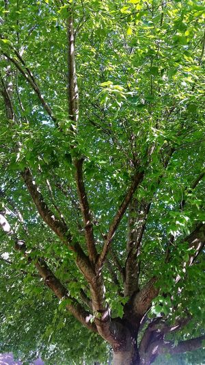 Tree Branch Backgrounds Leaf Close-up Green Color Plant Lush Foliage Greenery