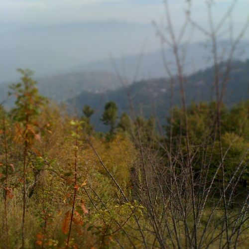 Nature Bhurban Heights Murree pc
