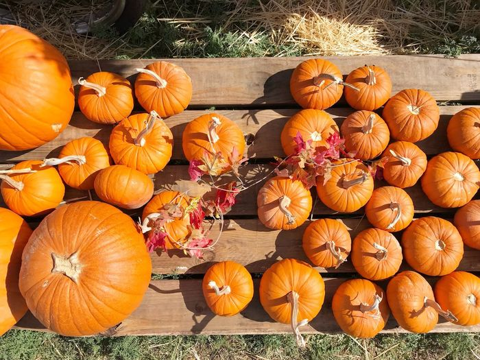 Pumpkin Autumn Halloween Orange Color Wood - Material Vegetable Day Squash - Vegetable No People Grass Outdoors Holiday - Event Field Celebration Leaf Plant Jack O' Lantern Nature Food Pumpkin Seed Pumpkinpatch