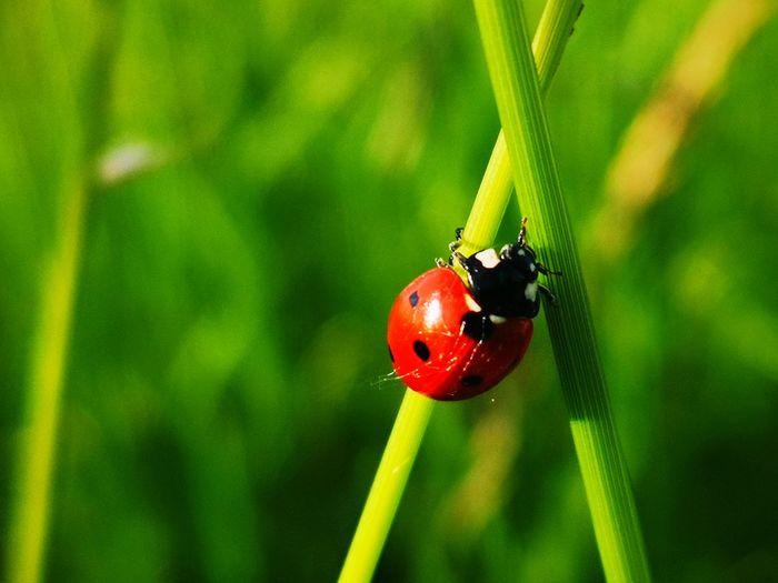 Ladybird Nature