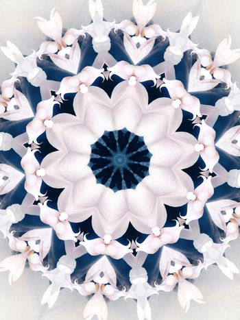Flower Symmetry Indoors  Fragility No People Beauty In Nature Close-up Day Flower Head Kaliedescope Pattern