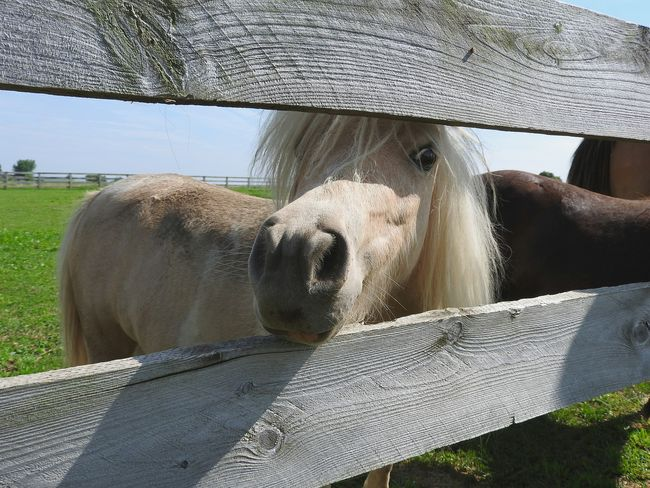 Taking Photos Check This Out EyeEm Gallery Animal Lover Animals Animal Photography Animal_collection Love Animals Unitedstates United States Love Horses Horse Photography  Horses Horse Life Country Life Country Living Countryside Peeking Out Peekaboo Peek-a-boo Peeking Through