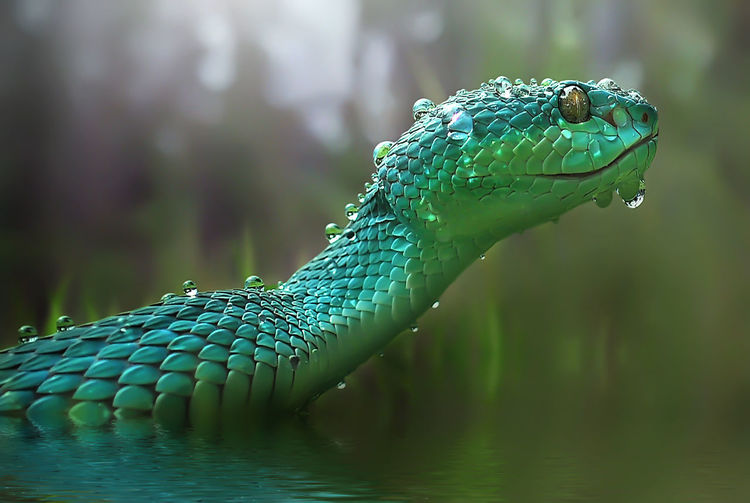 Close-up of wet snake swimming in lake