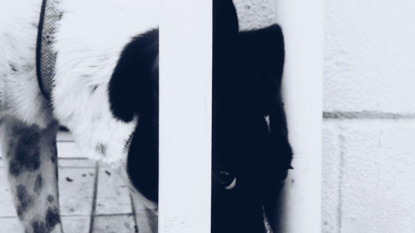 Dog Dogeye
