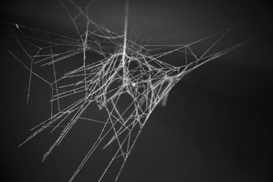 """38/365 So, I see this amazing light illuminating a spider web and run to grab my camera to get a shot. Liv says to me, """"Mommy, that's not what you're supposed to do when you see a spider web. You're supposed to scream and tear it down, there could be a spider in it!"""" Popular Photos Monochrome Taking Photos EyeEm Best Edits Tadaa Community Eye4photography  EyeEm Best Shots Project 365 Black & White Smart Simplicity EyeEm Bestsellers"""