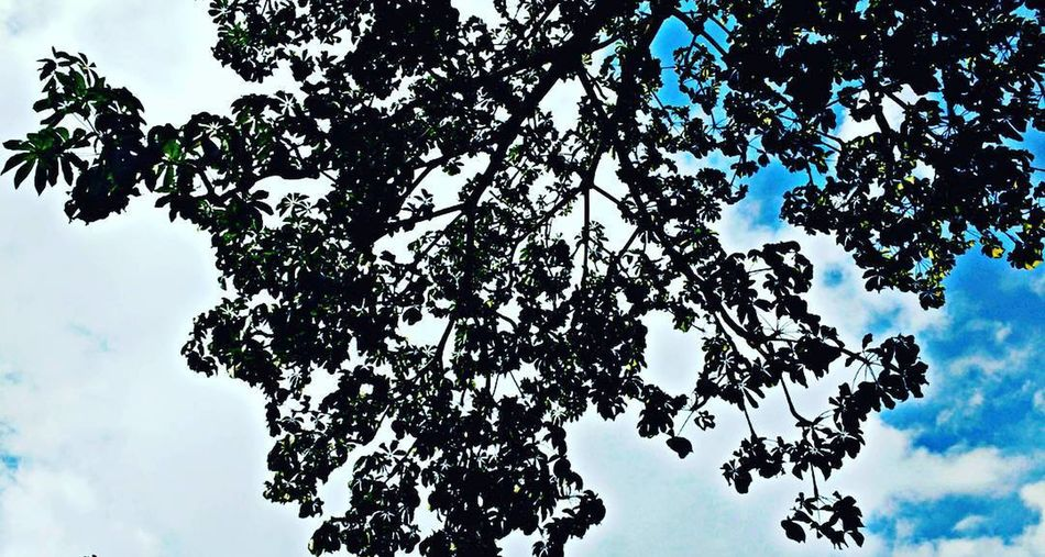 EyEmNewHere EyeEm Best Shots Beauty In Nature Blossom Branch Cloud - Sky Day Eyem Nature Lovers  Growth Height High Leaf Low Angle View Nature No People Outdoors Plant Plant Part Positive Emotion Scenics - Nature Sky Spring Tranquil Scene Tranquility Tree