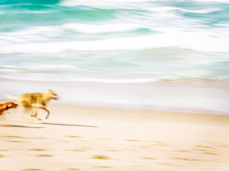 speed Running Animal Themes Beach Chase Day Dogs Running At Beach Domestic Animals Motion Nature No People Ocean Outdoors Pets Sand Sea Speed Two Dogs Water