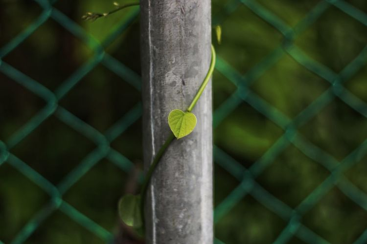 Reptile Trapped Chainlink Fence Close-up Animal Themes Green Color