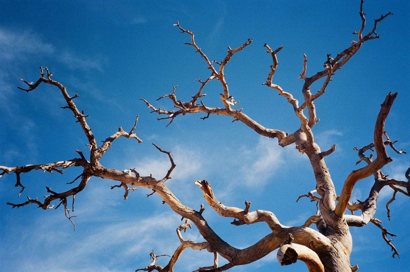 Tree Branch Plant Nature Beauty In Nature Sky Bare Tree