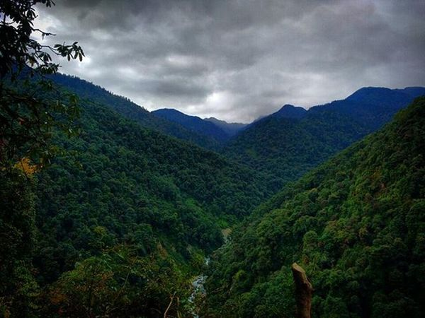 Another Shot Ontheway to Tshoka ( Sikkim ). That Dense Forest is a part of Kanchenjunga Wildlife Sanctuary  . The day was Cloudy but it was Helping the Green to get a Different Shade and the Picture tells the Story . TeamCleanUp GoechaLA2015 Travel2015 Traveldiaries Trekking Trek to GoechaLa ParaSight Instamoment Instashot Instagram landscape color