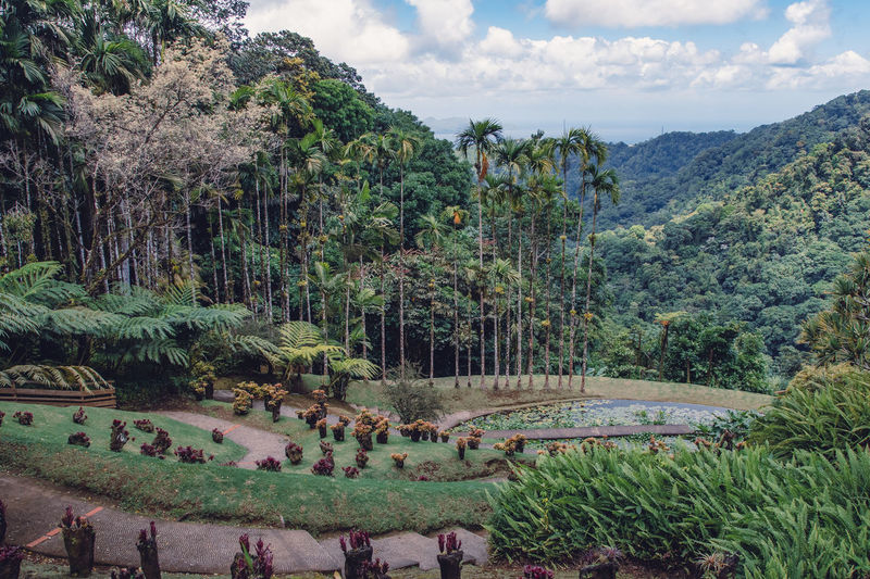Jardin de Balata, Martinique, French West Indies Green Plant Beauty In Nature Environment Flowers French Island Island Landscape Leaves Mountain Nature Outdoors Plant Scenics - Nature Tranquility Tree Tropical Tropical Plants Water