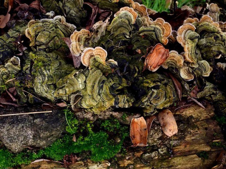 Fungi Fungi Fungus Toad Stools Spores Mould Beauty In Nature Wild Life Woodlands Steve Merrick Stevesevilempire Olympus OM-D