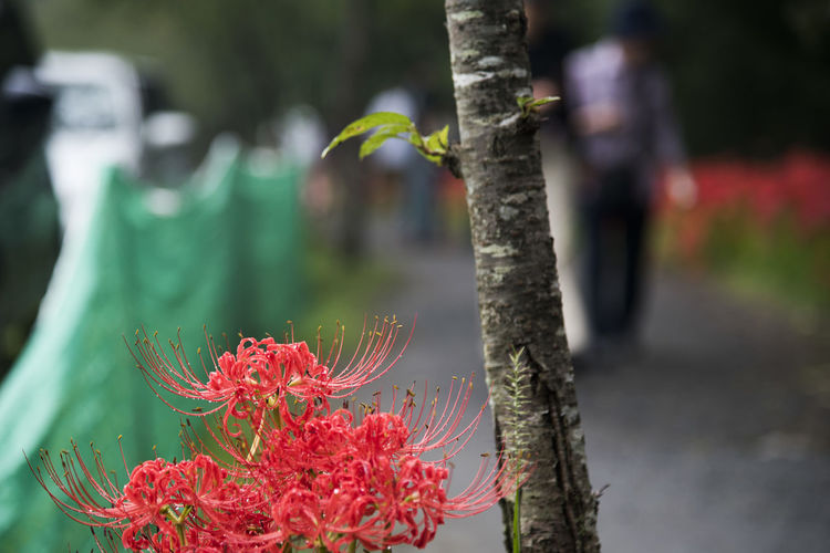 Close-up of red flower on tree trunk