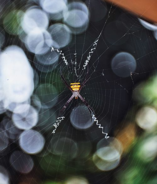 The web designer EyeEm Selects Spider Web Close-up Day Nature Outdoors Backgrounds Bokeh Experimental Photography Bestoftheday Animal Themes Snapseed Picoftheday EyeEm Nature Lover EyeEmNewHere Nikon D5300instaphoto Beauty In Nature Life