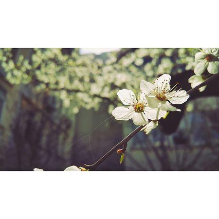 Yanga Kunduz Yanga Ayu Yange Yıl Yanga mavsum keldi Yarem kelmadi kelmadı 😆😆😛😄 Spring School Exam Day Sunny Weather Blossom
