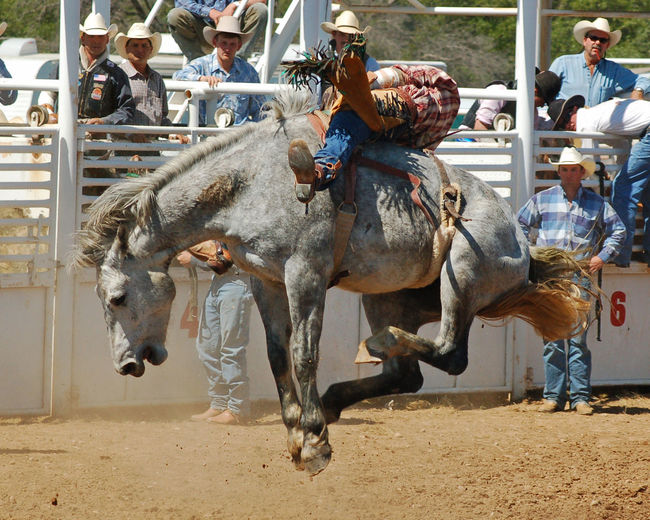 Wild Ride Broncos  Bucking Bronco Close-up Cowboy Day Domestic Animals Horse Large Group Of People Leisure Activity Livestock Mammal Men Outdoors People Real People Rodeo