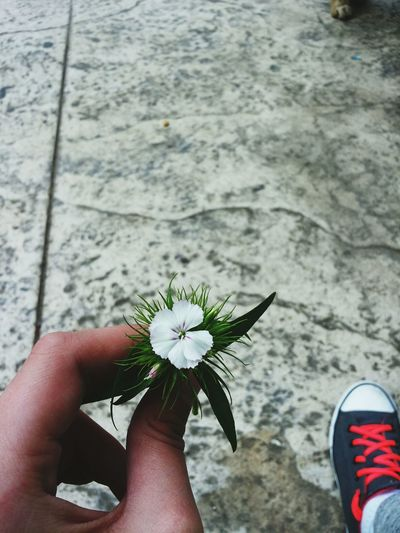 Good Things Come In Small Packages With Lightcase Hello World Having Fun Small Flowers