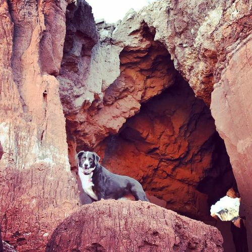 Dude Rock - Object One Animal Dog Animal Themes Mammal Pets Rock Formation Domestic Animals Day No People Outdoors Nature Mountain