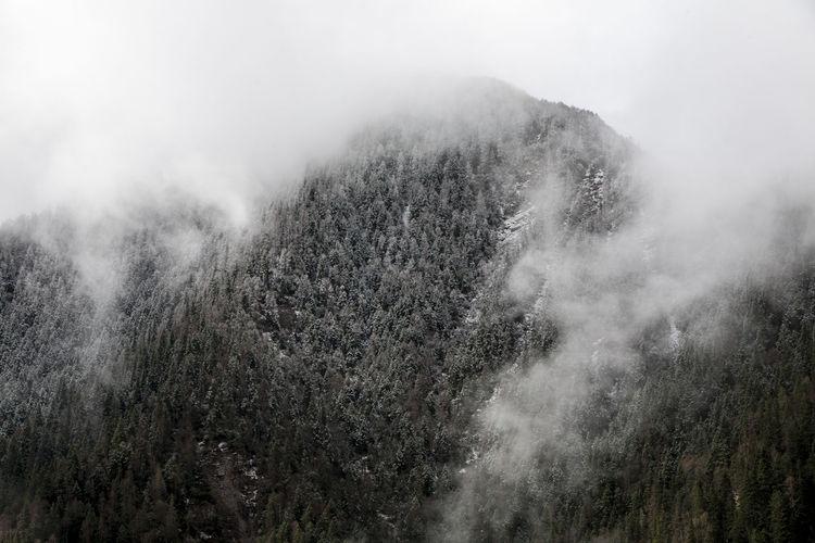 Mountain My Best Photo Tree Foggy Mist Fog Smog