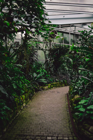 Jungle trail Green Green Paradise Greenhouse Growth In The Woods Jungle Jungle Life Lost In The Woods Natural Nature Nature Nature Trail No People Outdoors Palm Tree Palm Trees Paradise Plant Pure Nature Retreat Trail Tree Wald Walk Wildlife