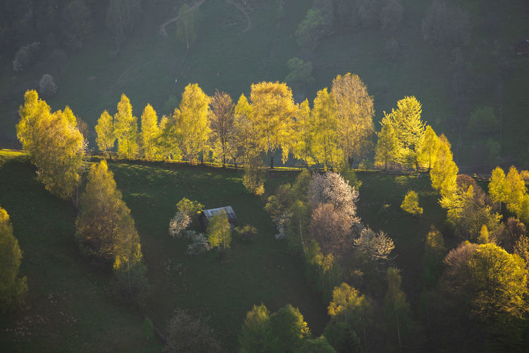 High angle view of yellow trees during autumn