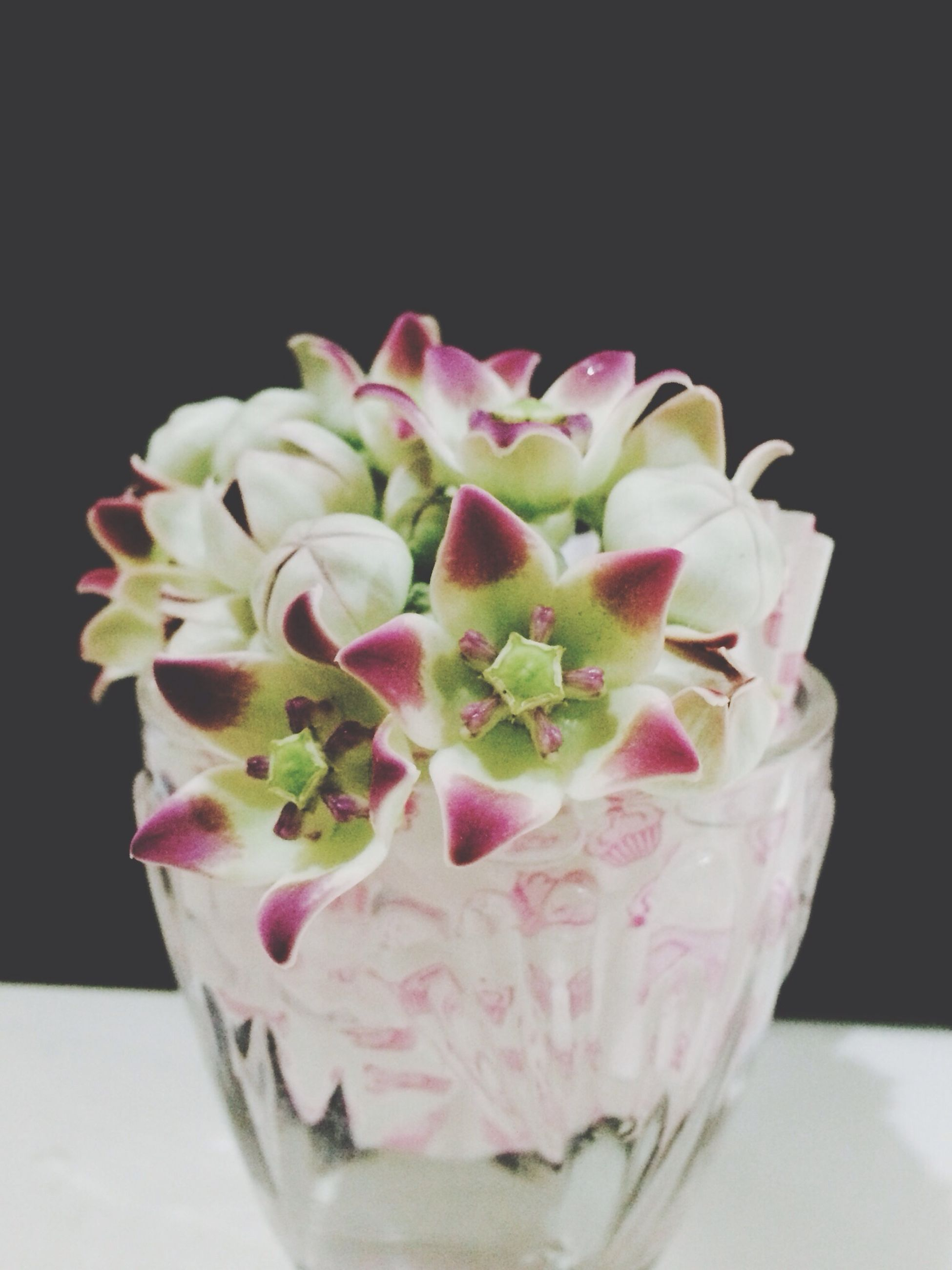 freshness, indoors, flower, studio shot, close-up, still life, table, food and drink, fragility, petal, vase, black background, pink color, flower head, food, glass - material, copy space, decoration, no people, white background