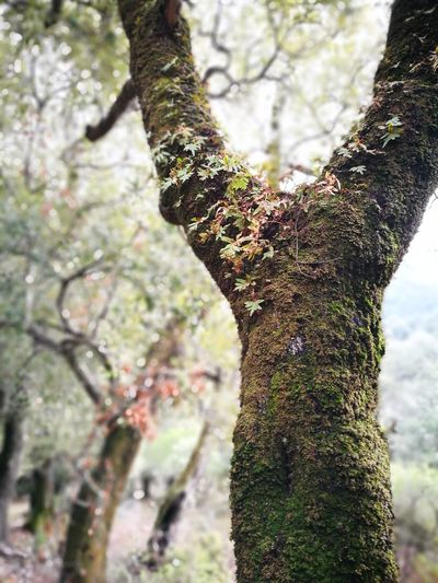 Muschi e licheni del bosco incantato Tree Tree Trunk Nature Focus On Foreground Forest Outdoors Day Close-up Beauty In Nature