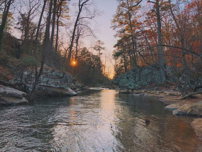 Scenic view of river stream in forest against sky