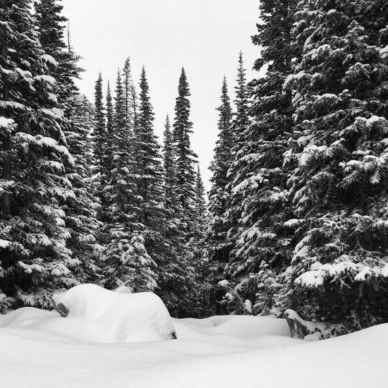 Winter wonderland. Showcase: December IPSWeather Mobilephotography Beautiful Idaho ShotOnIphone Landscape_Collection EyeEm Best Shots