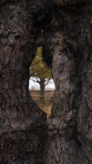 2044 Bark Tree