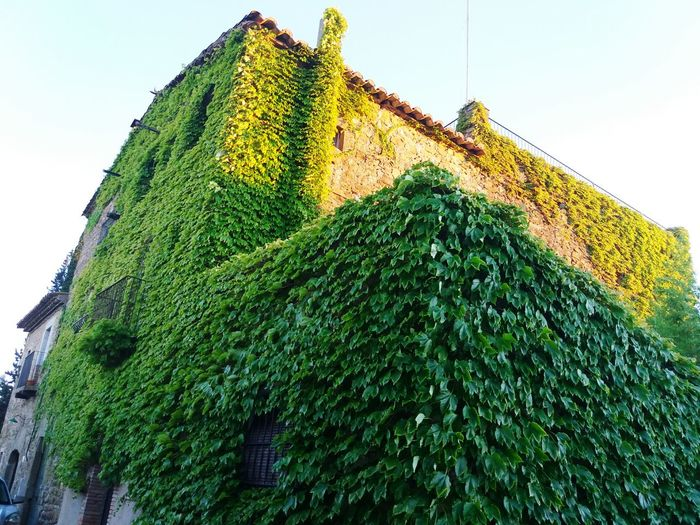 Green Color Outdoors Low Angle View Day No People Plant Architecture Building Exterior Casadepoble Jafra Jafra, Girona Sunset