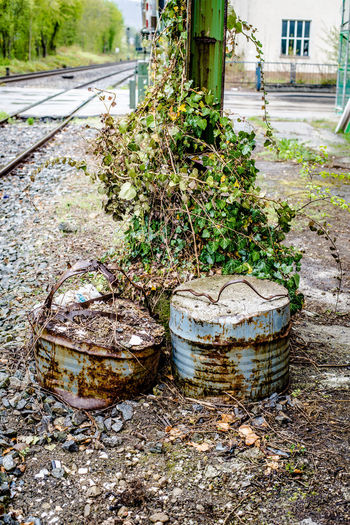 Backjards Barrel Close-up Day Drum Drum - Container Erode Eroded Growth Metalic Metalic Pillar Metalic Structure Metallic Tree Nature Nature Taking Over No People Outdoors Plant Post Stack Strange Things Tracks Wine Cask