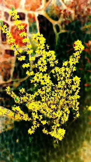 Yellow Power Flowers Nature Eye4photography  Eye4nature