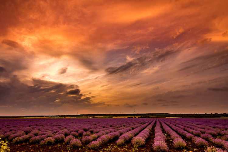 Scenic view of field against cloudy sky during sunset