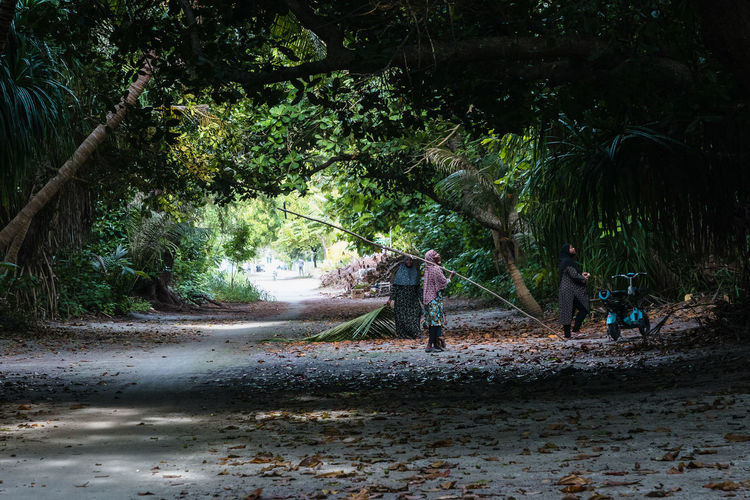 People on road amidst trees in forest
