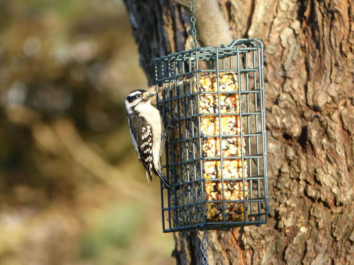 Animal Themes Animals Bark Bird Bird Feeder Close-up Day Eating Focus On Foreground Man Made Object No People Outdoors Perched Wood Pecker Zoology