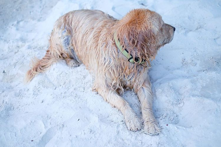 The origin of the word ... (หมาเมิน) 🐶 Dogs Of EyeEm Dog Love Dogs Dog Life Animal Snow Mammal Animal Themes One Animal Cold Temperature Winter Domestic Animals Domestic Dog Pets No People Land Outdoors White Color Day Canine Nature Vertebrate