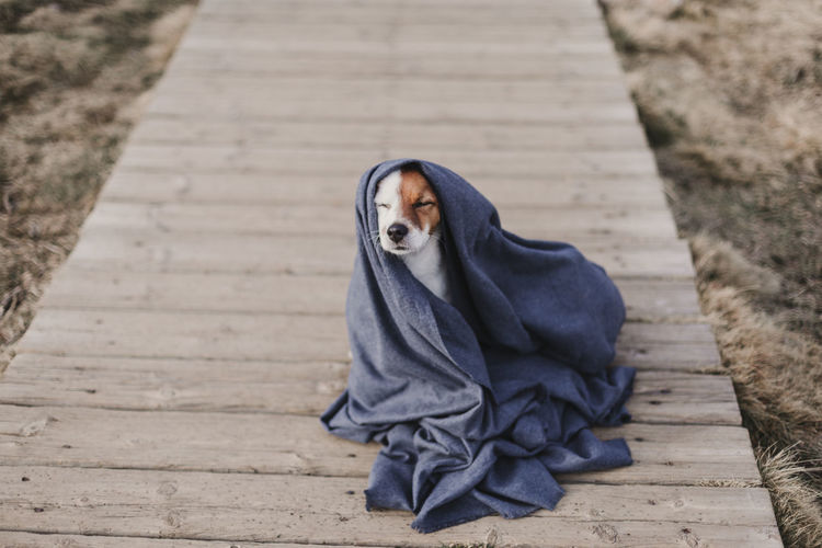 High angle view of dog with scarf sitting on footpath