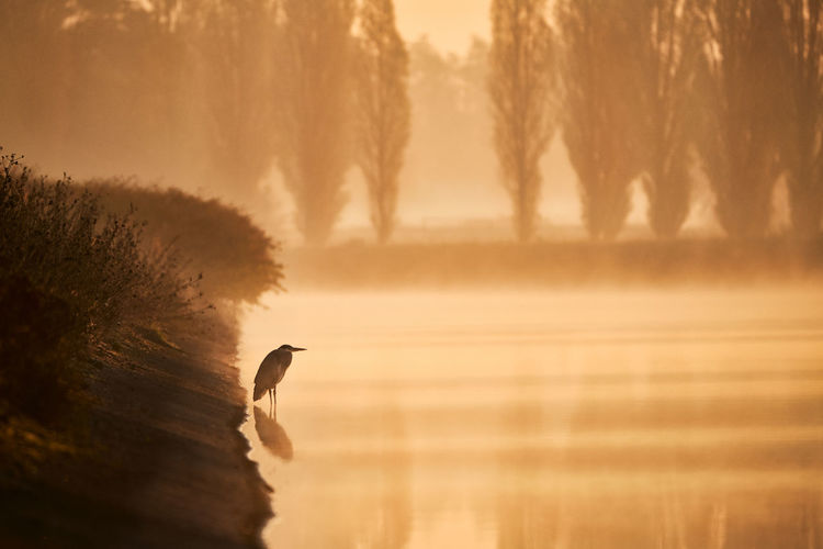 Bird in lake during sunset