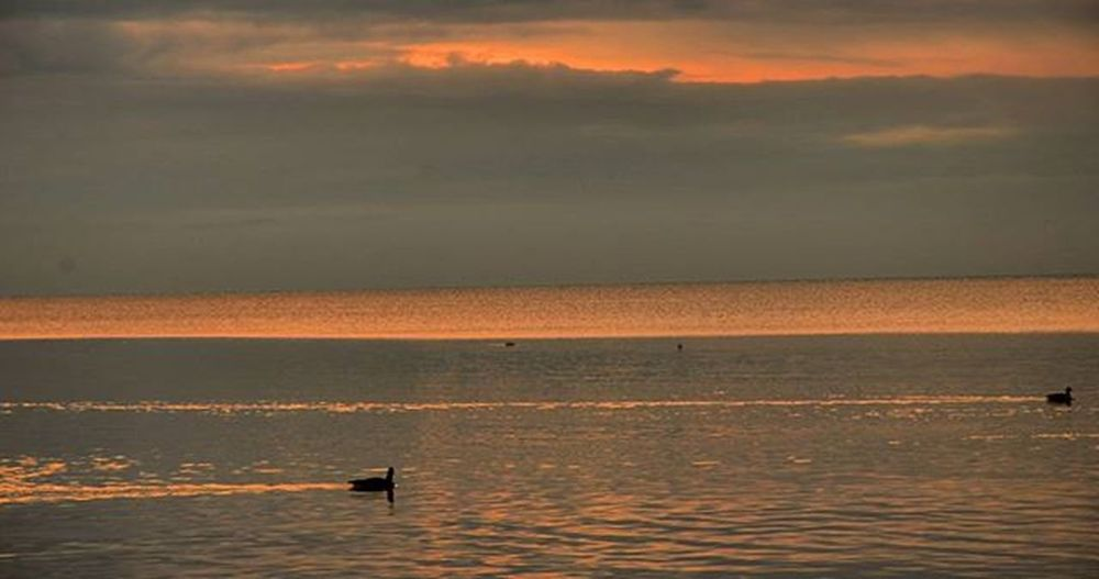The Canada Geese are happy. Sunrise Igsunrise Igsunriseandsunsets Water Reflections Ripples Orange Bright Colourful Beautiful Outdoors Winter Canadageese Lakeontario  Earlymorning  Everydayisdifferent Getoutside Outdoorphotography Naturephotography OutsideIsFree Hiking Nikonphotographers Nikonphotography D7000 Rrhurstphotography latowphotographersguild