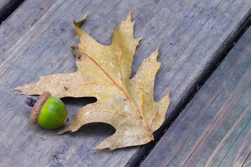Life Leaf Plant Part Close-up Autumn Day High Angle View Nature Dry Outdoors Change Leaves Still Life Wood - Material