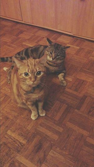 Je crois qu'ils ont faims.. ? Chat Cat Cute Taking Photos